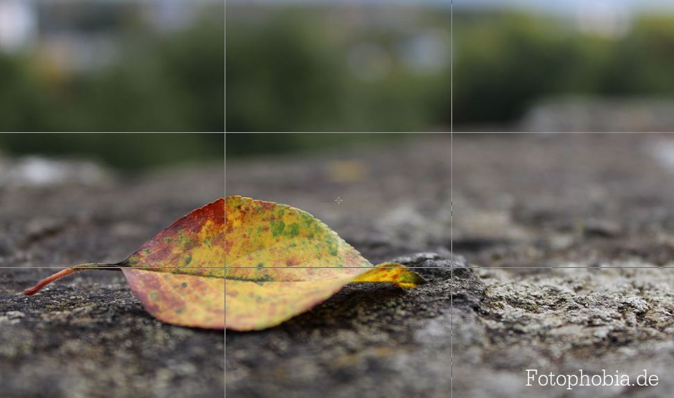 Foto eines Herbstblattes nach der Drittel Regel in Szene gesetzt