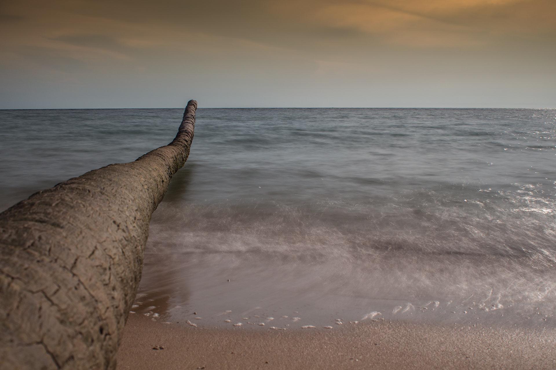 Baumstamm im Meer