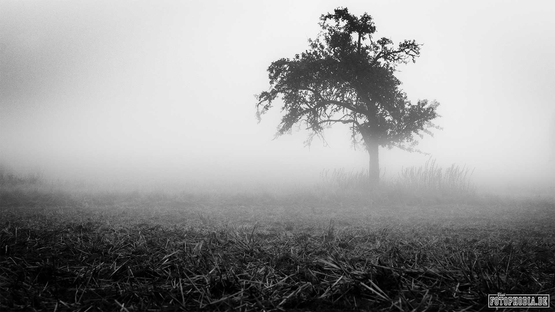 Baum im Nebel in schwarzweiss fotografiert