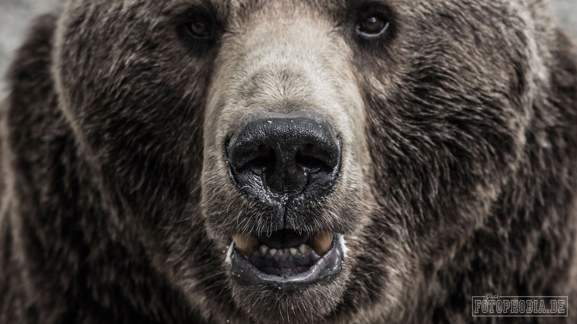 Foto eines Bären